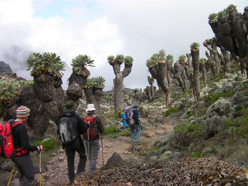 trekking mt kilimanjaro