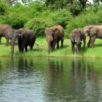 Flying Safari Botswana elephants