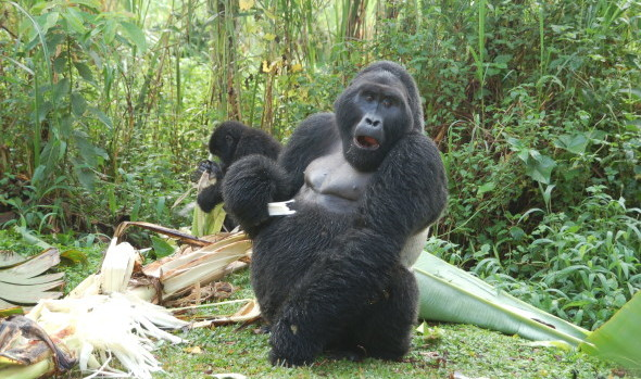 Explore Uganda Gorilla Tour - photo by Maxine Druker