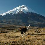 Ecuador Express Tour - Cotopaxi