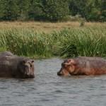 Encompassing Zambia Safari