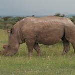Big Cat South African Safari
