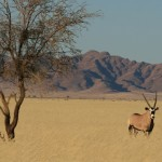 Explore Namibia Safari