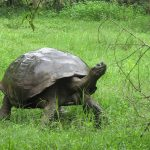 Odyssey Galapagos Cruise - tortoise photo by client Elizabeth Miles